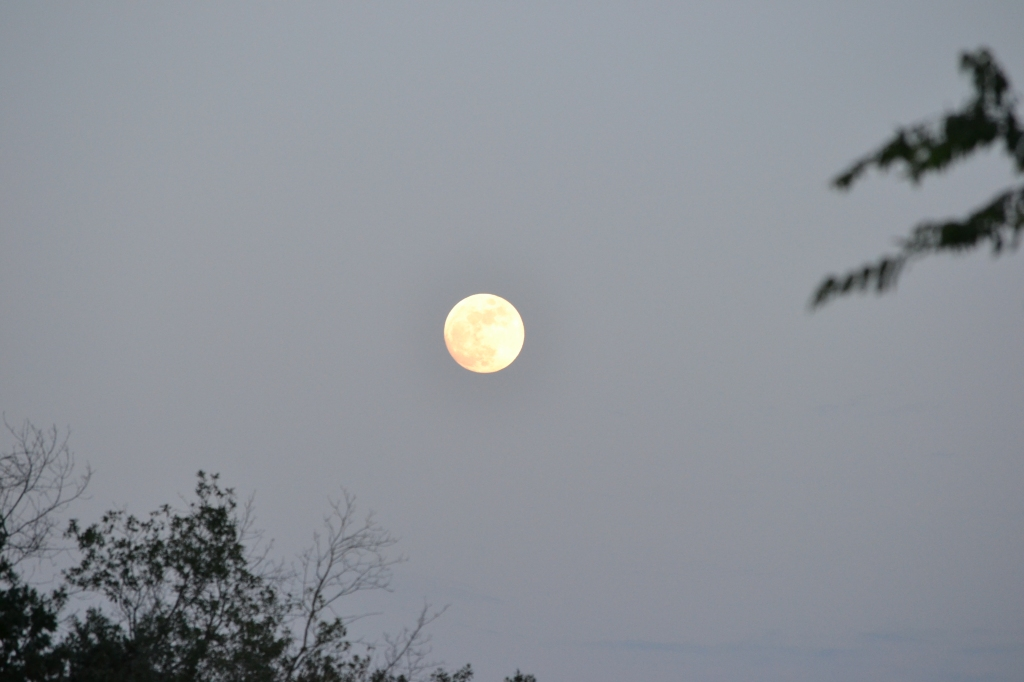 June Strawberry Moon
